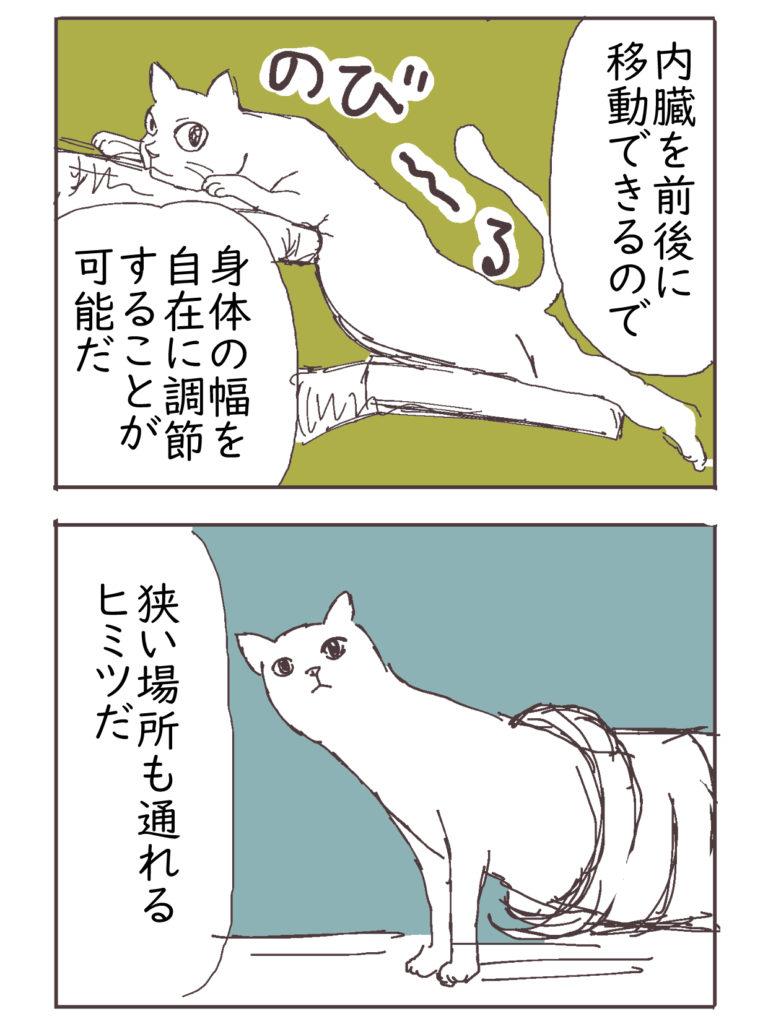 伸びる猫の体